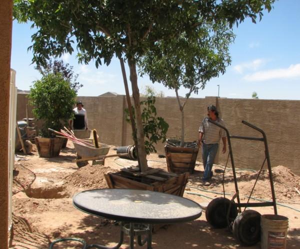 trees!  shade!!! 4/26/2007