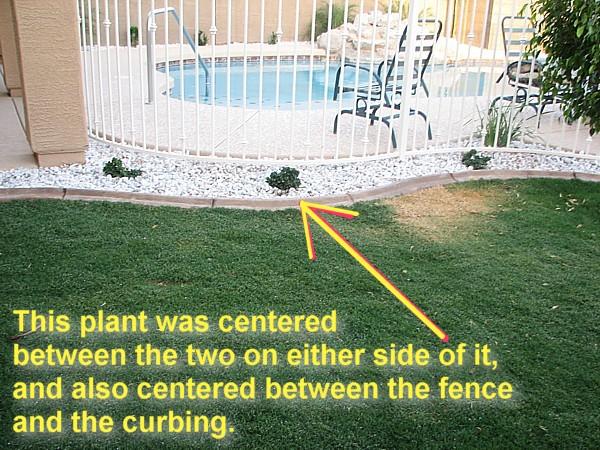 centered plant